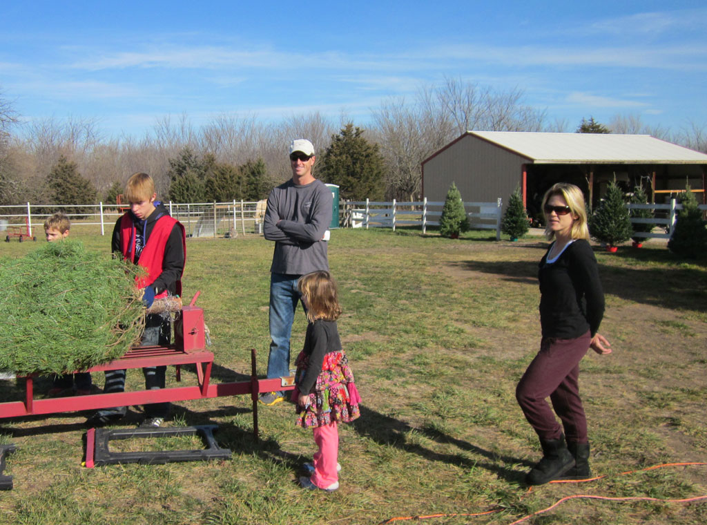 Christmas Tree Farm Services