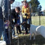 Christmas Tree Farm Petting Zoo