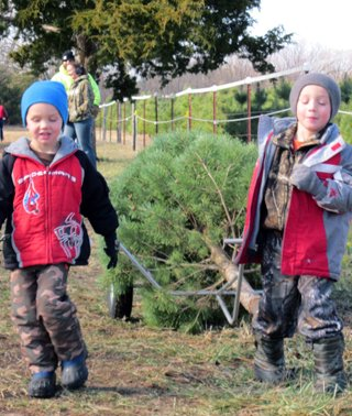 Kids Bringing In A Christmas Tree