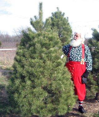 Santa And His Christmas Tree