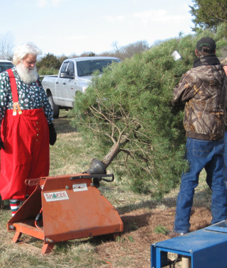 Santa Helping Shake A Tree